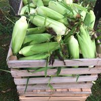 sweet corn in a crate