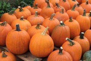 Jack-o-lantern pumpkins from Smith Farm
