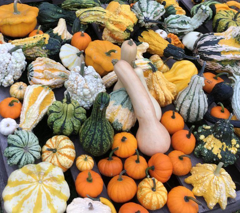 Fall pumpkin selection at Smith Farm