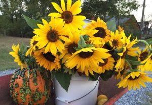 Sunflowers on a wagon